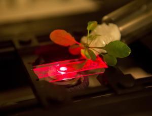 植物/该小组说,他们已经说服了纳米材料进入植物细胞,达到微小的...