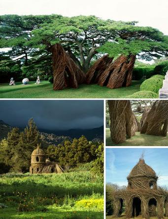 dougherty的一些结构复杂的树干的样子