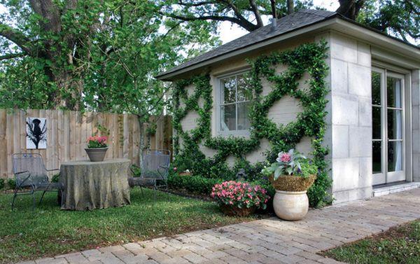 藤蔓墙给夏季房屋的绿衣 市场观察 行业新闻 建材网