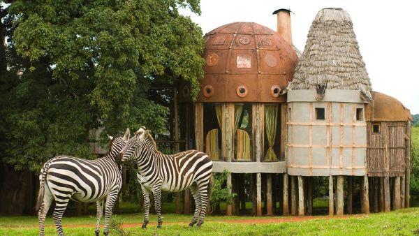 南非野生动物园旅店的惊险经历